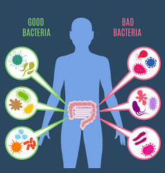 intestinal flora gut health concept with vector image vector image