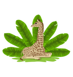 giraffe and banana fan print vector image