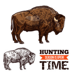 Bison buffalo bull or ox wild animal sketch vector