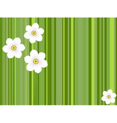 Flowers daffodils vector