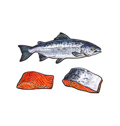 Sea red salmon fish meat fillet set vector