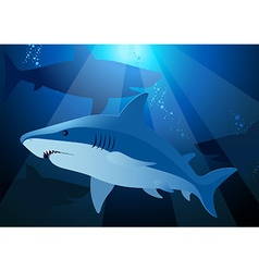 Shark swimming under the sea with sunlight vector image