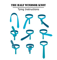 the half windsor tie knot instructions isolated on vector image