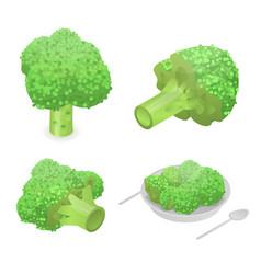 broccoli cabbage icon set isometric style vector image