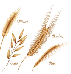four agricultural crops vector image