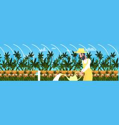 Man farmer watering cannabis industrial hemp vector