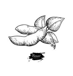 white bean plant hand drawn vector image