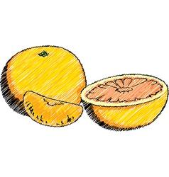 Orange and Mandarin vector image vector image