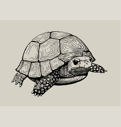 isolated hand drawn tortoise vector image