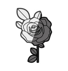 Monochrome silhouette flowered rose with leaves vector