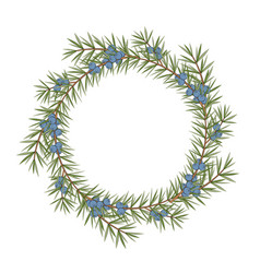 Isolated round frame of a juniper vector