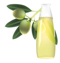 Olive branch and bottle of oil vector