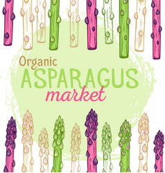 Organic asparagus market hand drawn vector