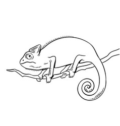Chameleon animal coloring book vector