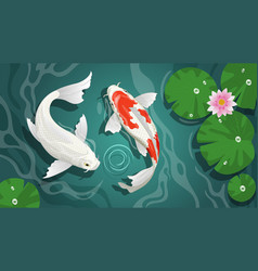 Couple beautiful koi in pond vector