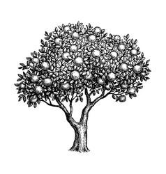 Ink sketch apple tree vector