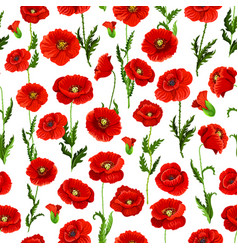 seamless pattern of poppy flowers bunch vector image