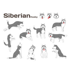 Siberian huskydog in action happy dog vector