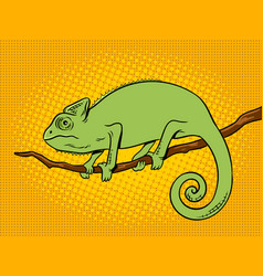 Chameleon animal color pop art vector