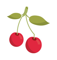 cherry berry nutrition icon vector image