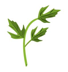 Coriander leaves herbal cartoon vector