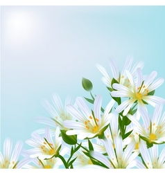 Floral background Daisies vector image vector image