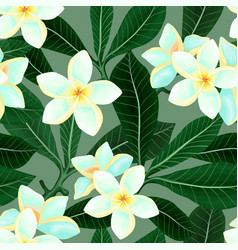 seamless pattern with frangipani plumeria flowers vector image
