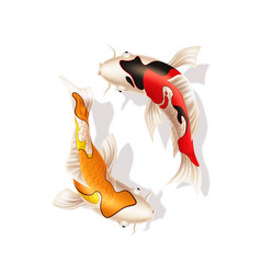 Koi carps realistic fish eastern symbol vector