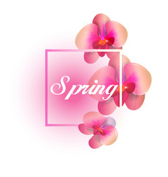 Spring pink orchid white background image vector