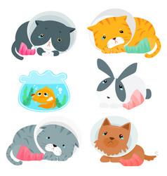 variety animal splinting pack vector image