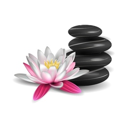 Water lily and zen stones vector image vector image