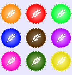 Wheat Ears Icon sign Big set of colorful diverse vector image