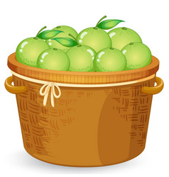 A basket of lime vector