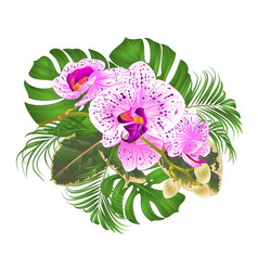 Bouquet with tropical flowers floral arrangement vector