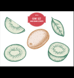 collection of hand drawn pastel kiwi vector image