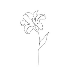 Lily flower on white vector