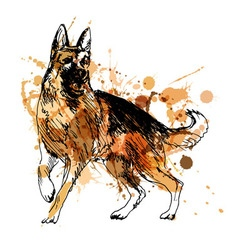 Colored hand drawing of a german shepherd vector