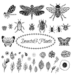 Hand drawn zentangle black plant leaves vector image