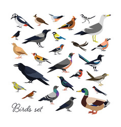 Bundle of city and wild forest birds drawn in vector