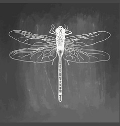 dragonfly beauty insect hand drawn stock vector image