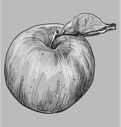grey fruit-3 vector image