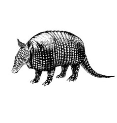 hand drawn armadillo sketch vector image