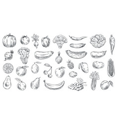 sketched vegetables and fruits hand drawn organic vector image