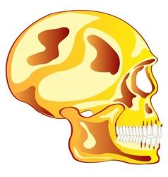 Skull from gild in profile vector image