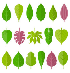 leaves icon set 1 vector image vector image