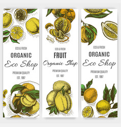 banner for eco store colorful citrus card vector image