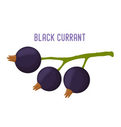 organic berry - black currant tasty fruit vector image