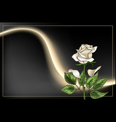 Single white rose flower and frame on black vector