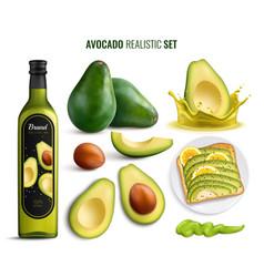 avocado realistic set vector image