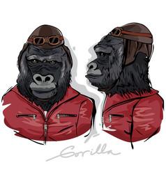Gorilla dressed as human pilot vector